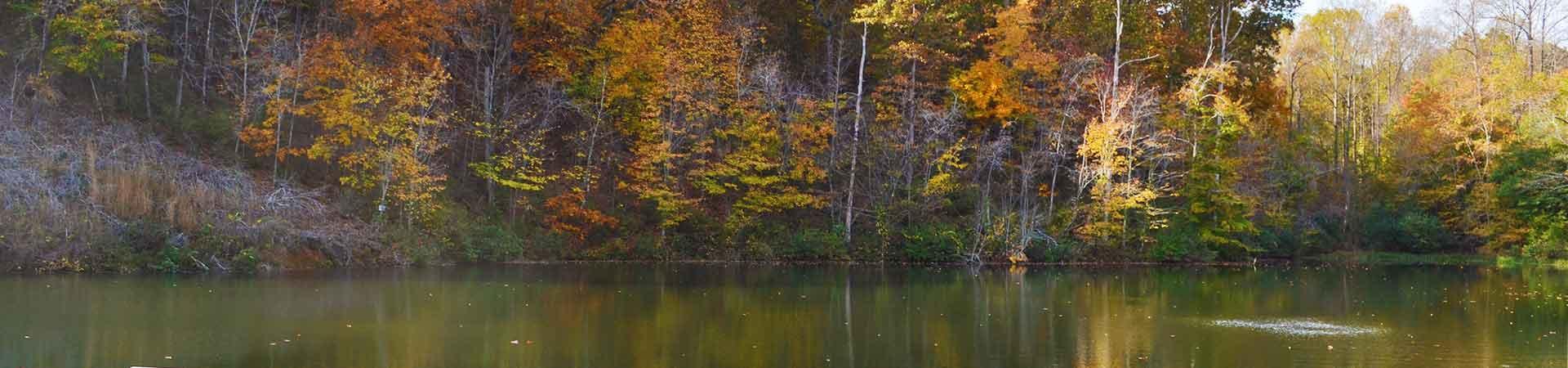 Lake and Treeline
