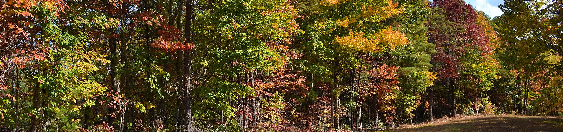 line of trees at Warwoman Wildlife Management Area