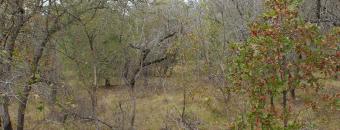 Sandhills at Alligator Creek