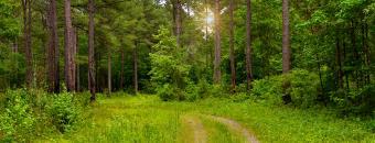 Tree Pasture