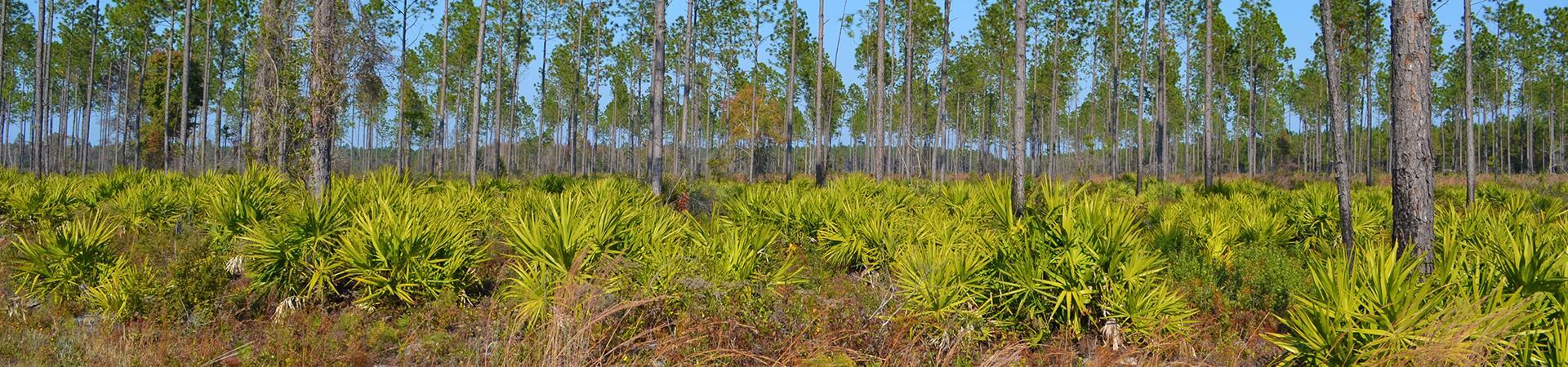 habitat at Sansavilla Wildlife Management Area