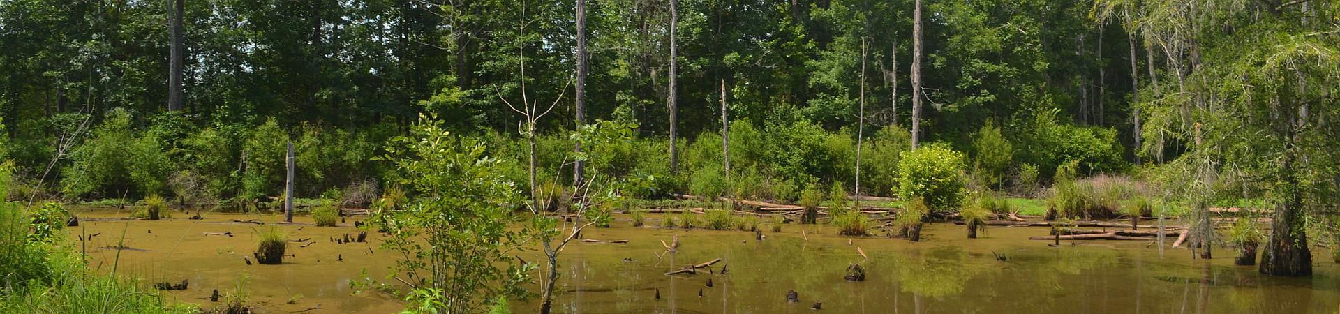 Swamp at WMA