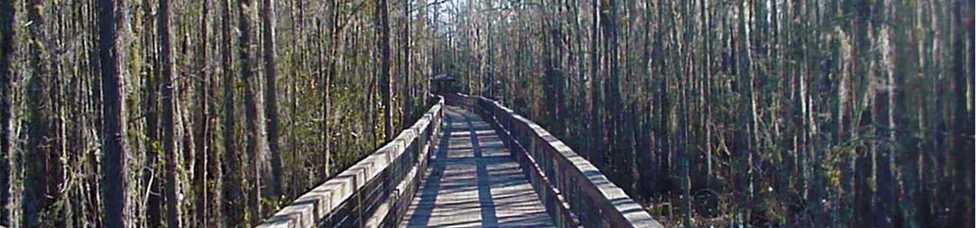 Wetlands Bridge