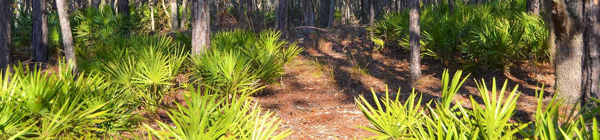 Palmetto Fronts at Griffin Ridge